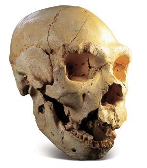 1-11431-skull-5-sima-de-los-huesos-spl.jpg