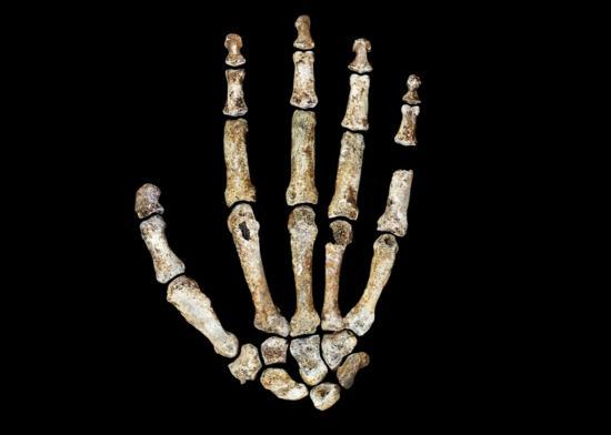 151217 sci homo nadeli hands jpg crop promo xlarge2