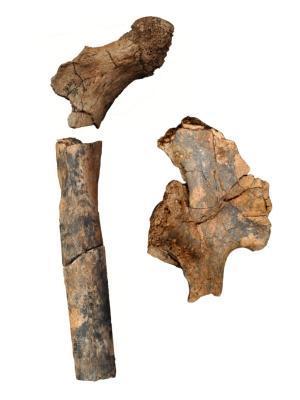 2 ancientfossi