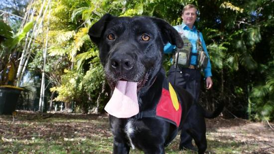431693-dog-expert-gary-jackson-with-his-black-labrador-cross-migaloo.jpg