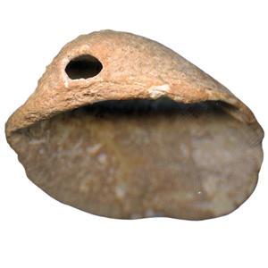 6-shell-beads-from-spain.jpg