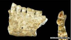 64871003-toothjpeg.jpg