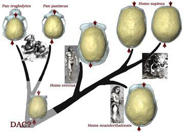 arbre-evolutif.jpg