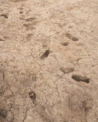 Arizona footprints