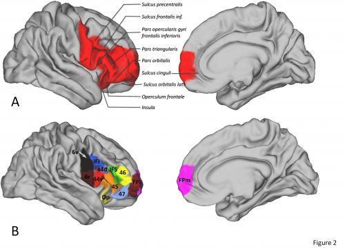Brainregions