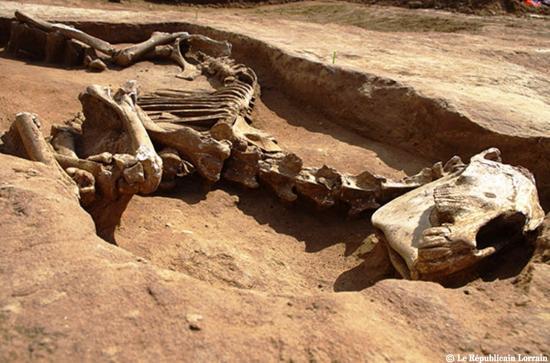 Ce cheval devait accompagner son proprietaire dans la mort les recherches pour l instant ne disent pas comment il est arrive la photo pole archeologie preventive de metz metropole