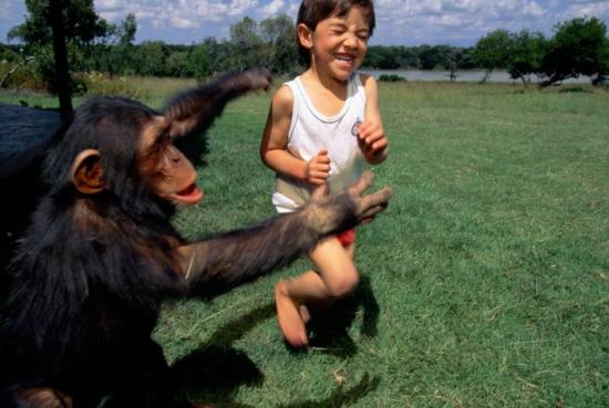 Chimp human ancestry 80647 990x742 700x470