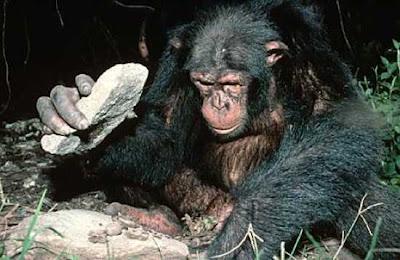 chimp-tools.jpg