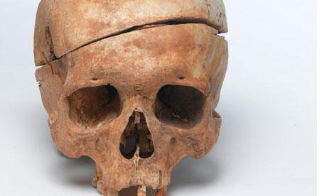 dissected-skull-008.jpg