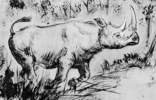 Extinctrhino