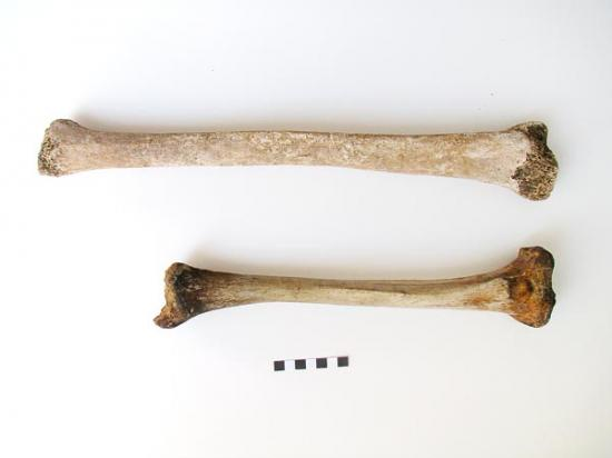 gigantism-found-in-roman-skeleton-61059-600x450.jpg