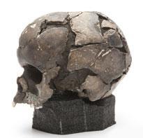 head-skull-vistegutt.jpg