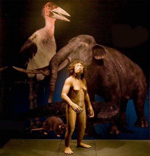 Hobbit homo floresiensis