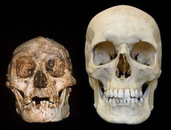 Hobbit skull 1