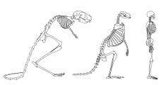 hominin2.png