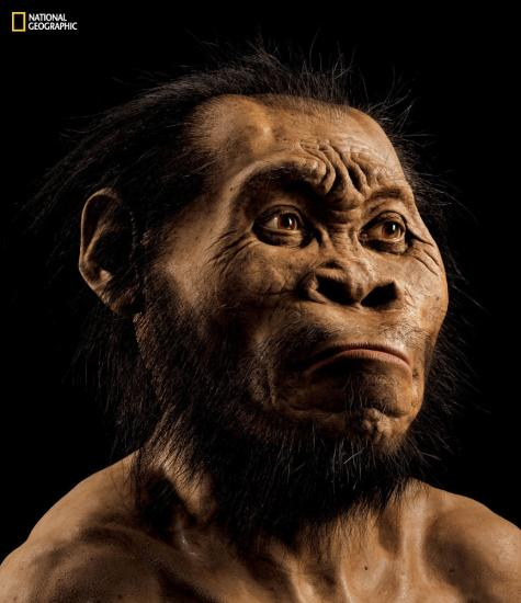 Homo naledi illustration