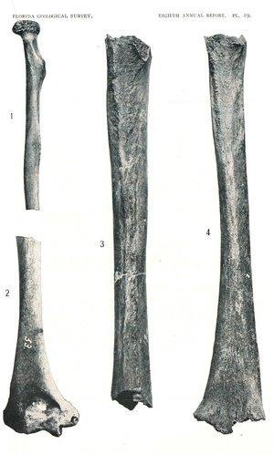 Human fossils custom af43e48e9758f74a9cdd4a1020c49be57e174715 s300 c85
