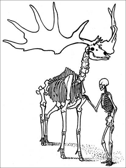 Inside man and deer skeleton
