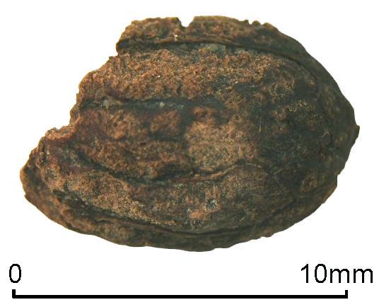 iron-age-olive.jpg