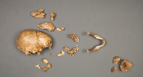 jamestown-cannibals-bones-715.jpg
