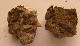 lo-res-fea-photo-shit-na-diet-03-coprolites-hi-res-courtesy-professor-karl-reinhard-dscn2805-270x155.jpg