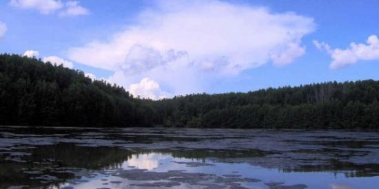 mangrove-swamp-in-ecological-tourist-zone-vam-sat-c-n-gi-district-ho-chi-minh-city-vietnam-578x289.jpg