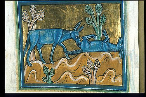 medievalhorses.jpg