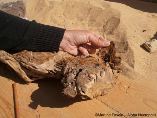 mummy-dog-2.jpg