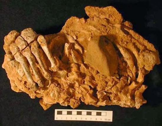 Neanderthals spain 4c