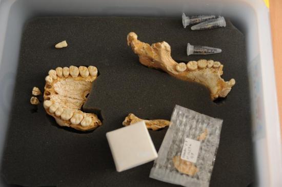 neanderthals.jpg