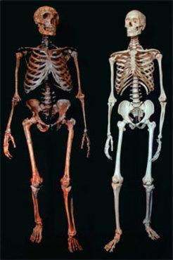 Neanderthalv