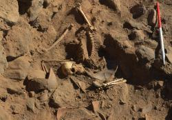 nubia-skeleton.jpg