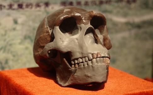 Pekin man skull 2