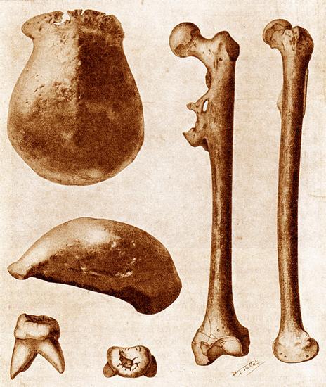picresized-1347204858-pithecanthropus-erectus.jpg