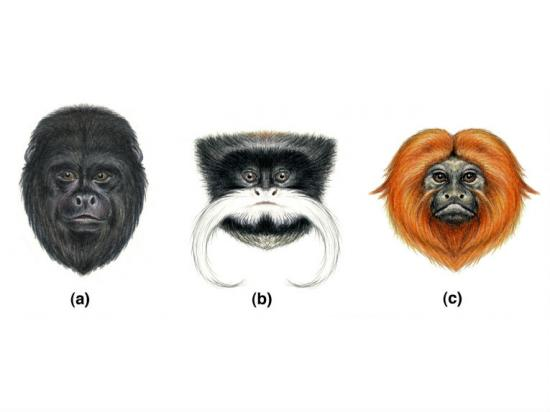 plain-faces-primates-communicate-evolution-12112.jpg