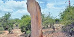 Prehistoric human