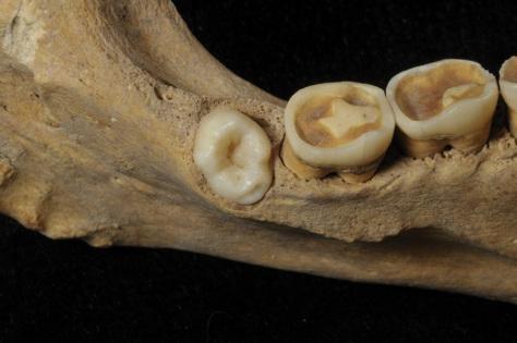 Quart molar ata detall p