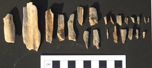 rimrock-pleistocene-enamel.jpg