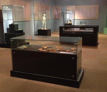 Salle des hominides anciens artifica