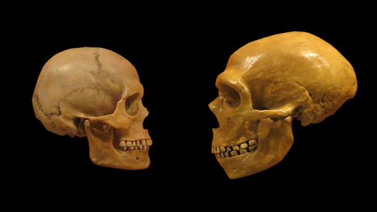 Sapiens neanderthal comparison en blackbackground