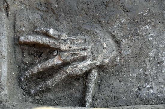 severed-hand-1.jpg