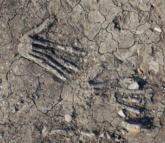 http://www.archeolog-home.com/medias/images/severed-hand-3.jpg?fx=r_550_550