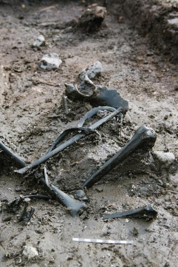 Skelet af jernalderkvinde fundet i udgravning i skoedstrup 2015 foto jacob due moesgaard museum 684x1024