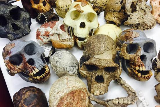 Skulls 1 holloway 0