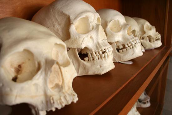 skulls-sized.jpg