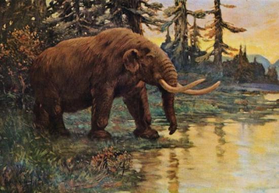 Sn extinctions