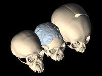 sn-skull-thumb-200xauto-13152.jpg