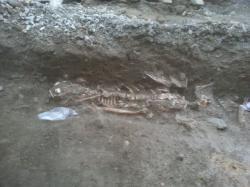 Squeletteadulte