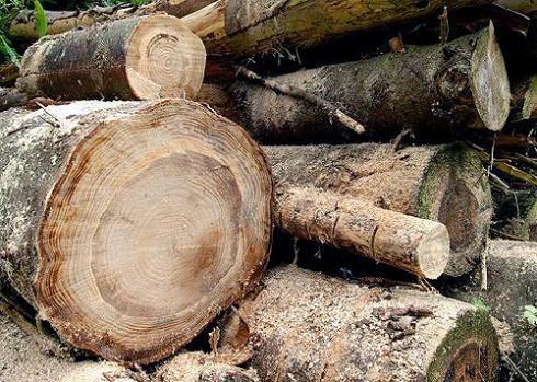 treeringscie.jpg