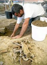 ville-rose-fouilles-os-1159495-160x220.jpg